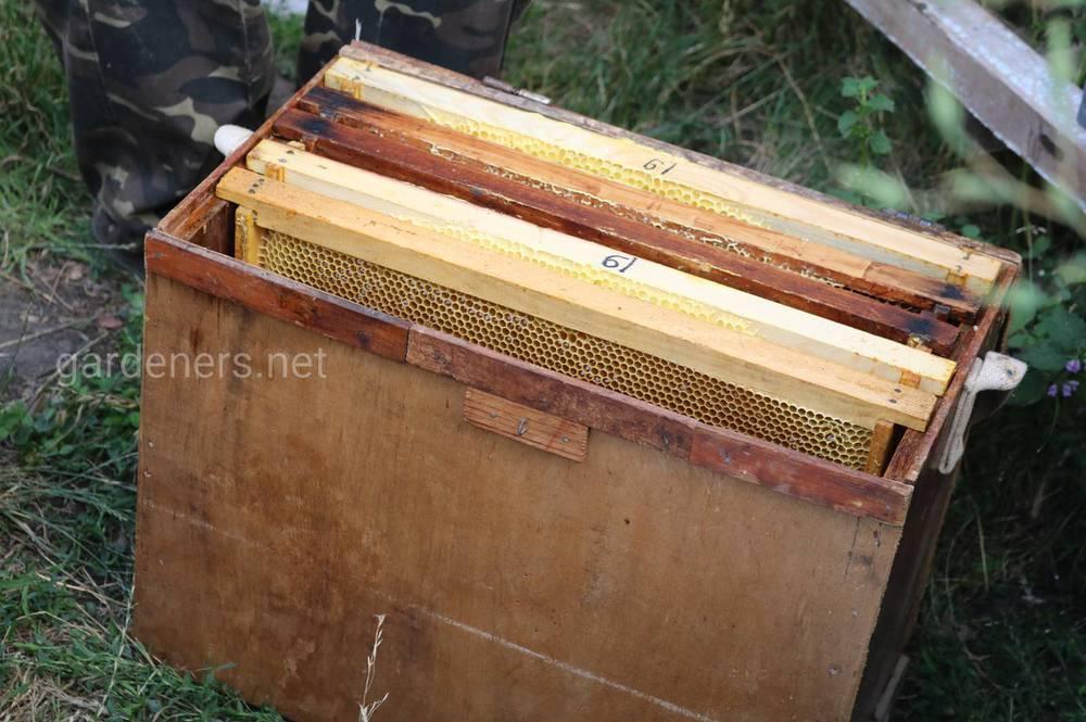 мед и пасека