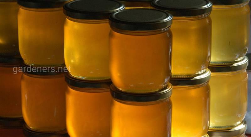 Мёд из разнотравья: какие бывают виды и в чем их польза