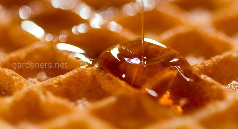 ТОП-15 стран, где производят вкусный и полезный мед: особенности состава и вкуса