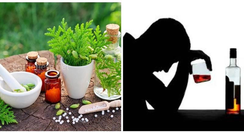 Лекарственные травы и рецепты народной медицины для лечения алкогольной зависимости