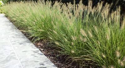 Травы для клумбы.jpg