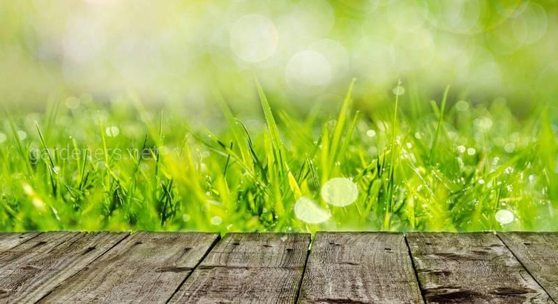 Чтобы газон был красивым и густым: перечень весенних, летних и осенних подкормок