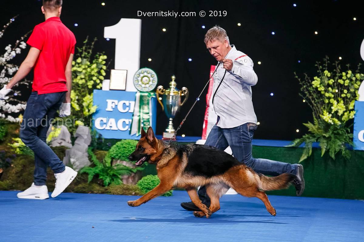 Міжнародні виставки собак усіх порід «Золоті ворота» та «Україна».