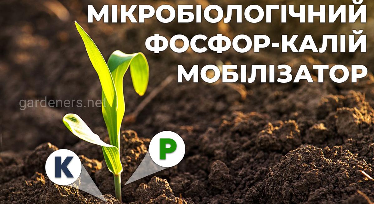 Фосфор-калій мобілізатор для сільськогосподарських культур