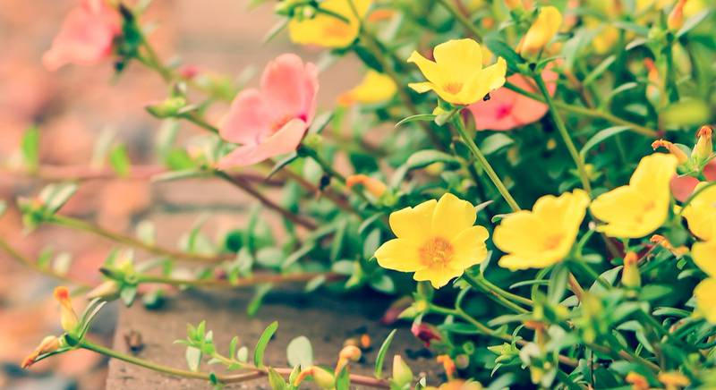 Вечно цветущая клумба. Какие растения сажать