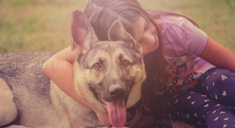ТОП-15 порід собак для дитини: характер, темперамент, звички та фото домашнього улюбленця