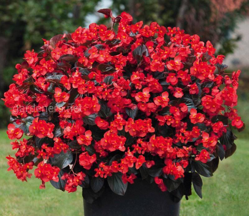 Какую работу в цветниках необходимо провести в течении весны?