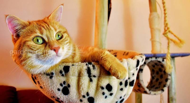 ТОП-10 пород кошек для квартиры: повадки, характер и темперамент животного