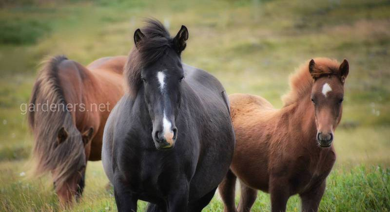 Самая быстрая лошадь в мире: как зовут чемпионку
