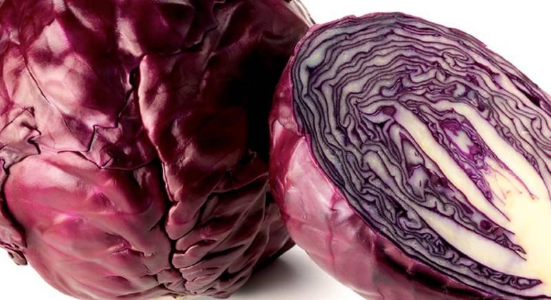 ТОП 6 сортов краснокочанной капусты для хорошего урожая