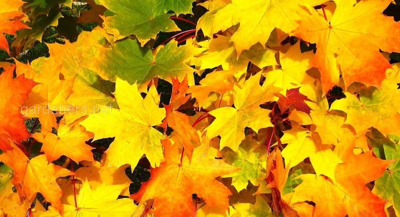 осенние листья.jpg