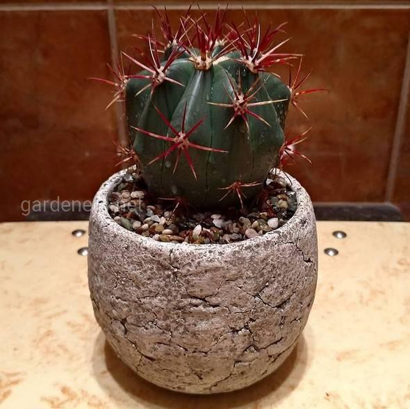 Які кімнатні рослини не потребують надмірного догляду?