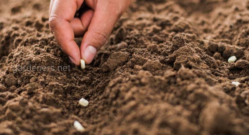 Когда нужно сеять семена на рассаду