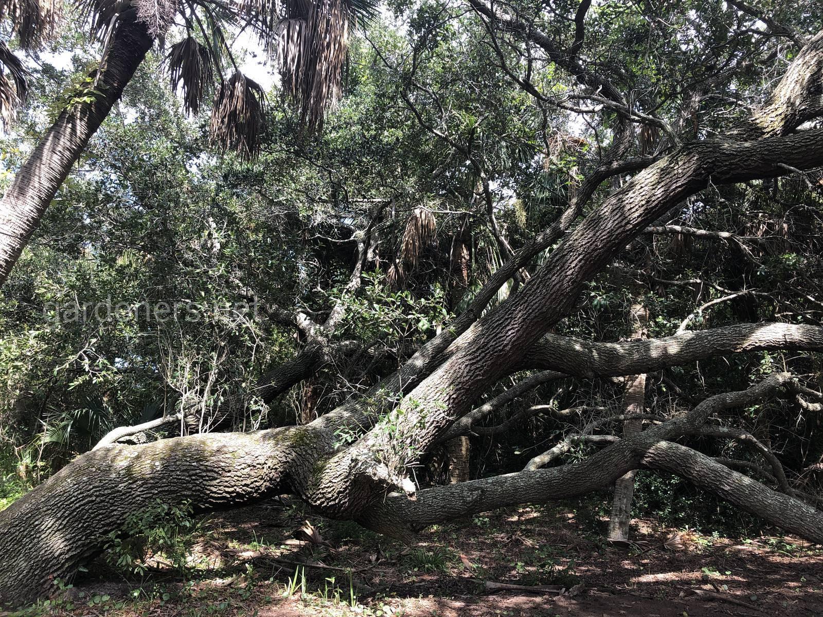Болотистая дикая природа Флориды