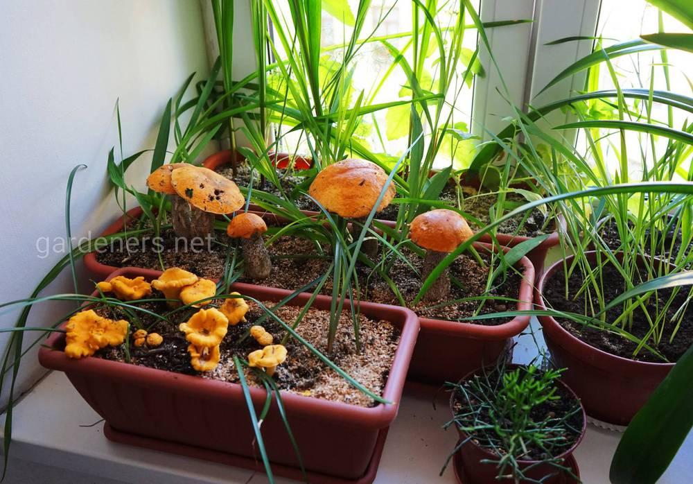 Гриби в кімнатних рослинах