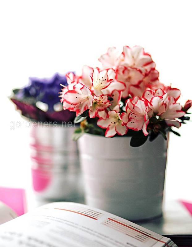 Які квіти добре виглядають у ванній?