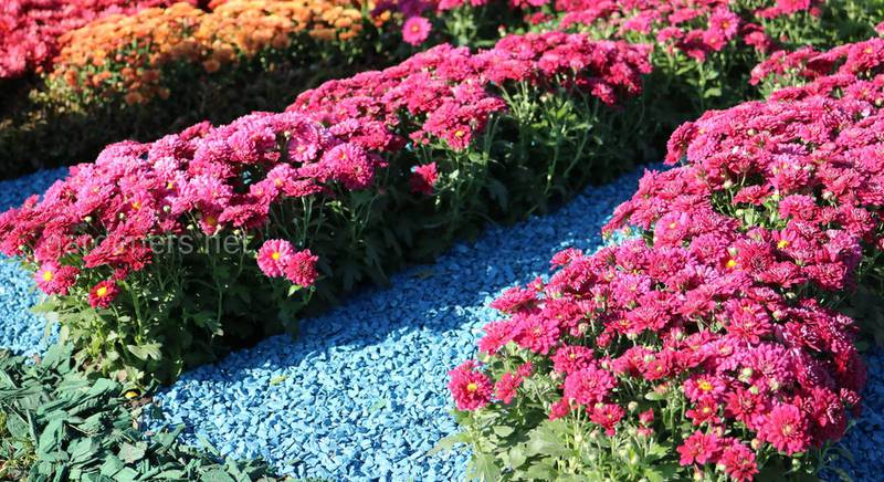 Декоруємо сад кольоровим камінням: варіанти застосування природного матеріалу