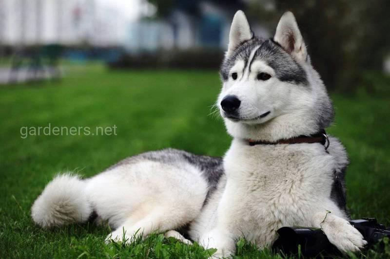 Завжди готові до дії: десять порід собак, що киплять енергією