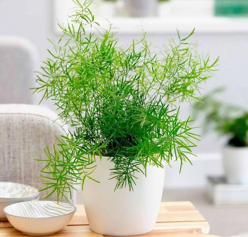 Какие комнатные цветы являются природными очистителями воздуха?