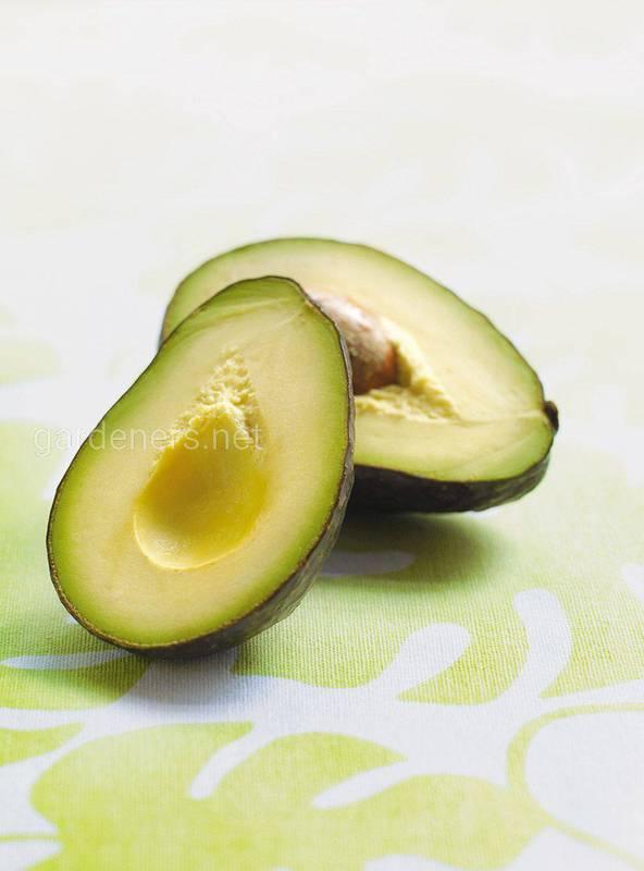 Масло авокадо в кулинарии