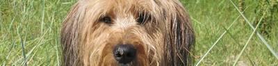 Собака Валлер