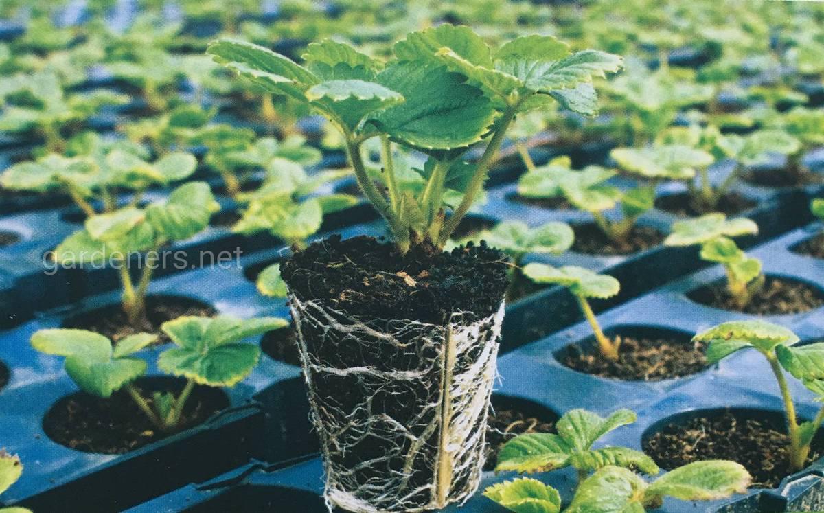 Зберігання базового рослинного матеріалу в теплицях