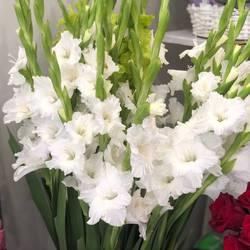 BloomingDay