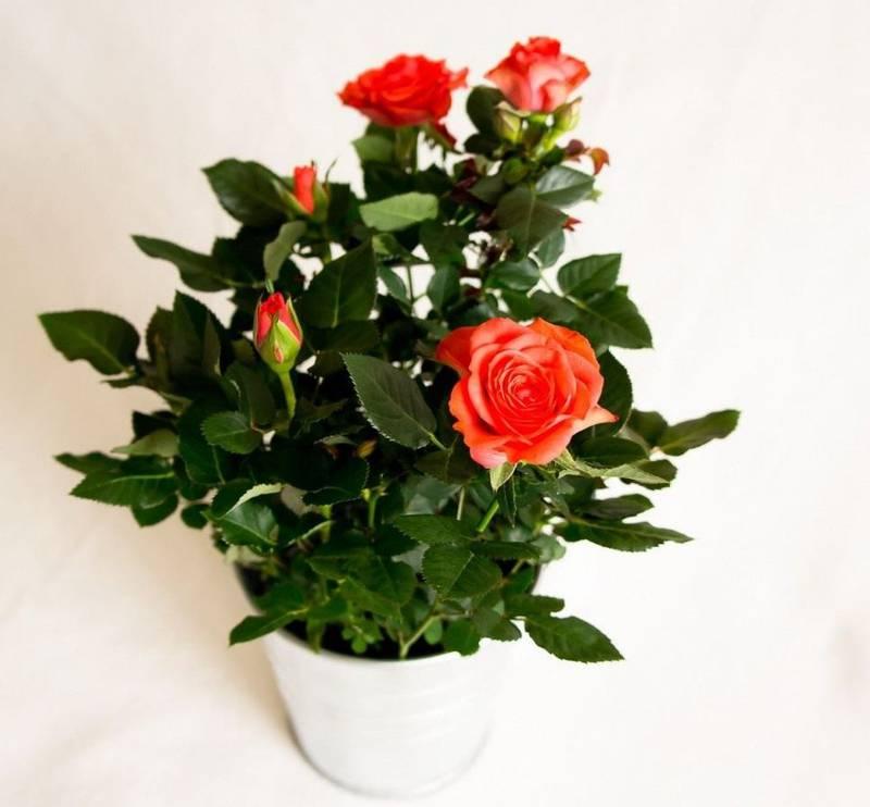 Як розпізнати хвору квітку та справжні причини хвороби?
