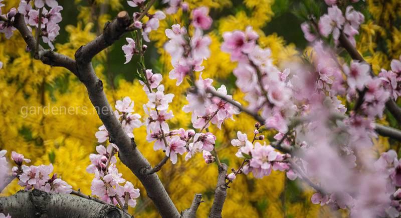 ТОП-20 советов на весну