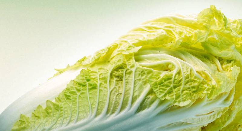Все о посадке, уходе и сборе хороших урожаев мега витаминной пекинской капусты