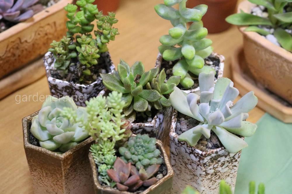 Растения в кашпо из обливной керамики.