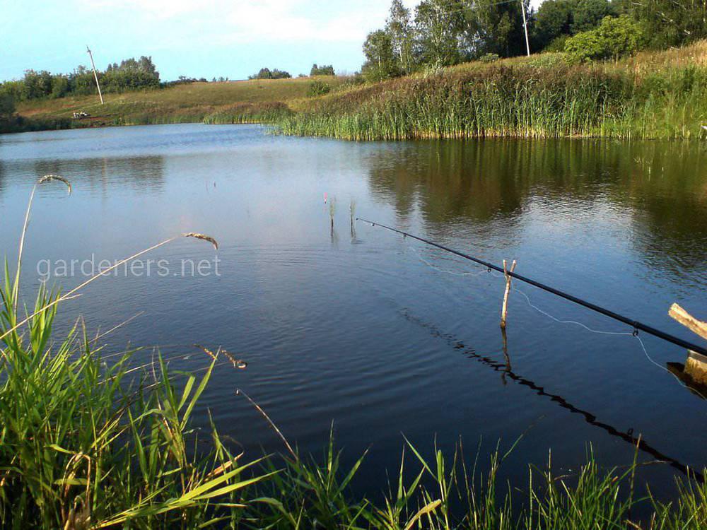 Як правильно ловити рибу на поплавкову снасть