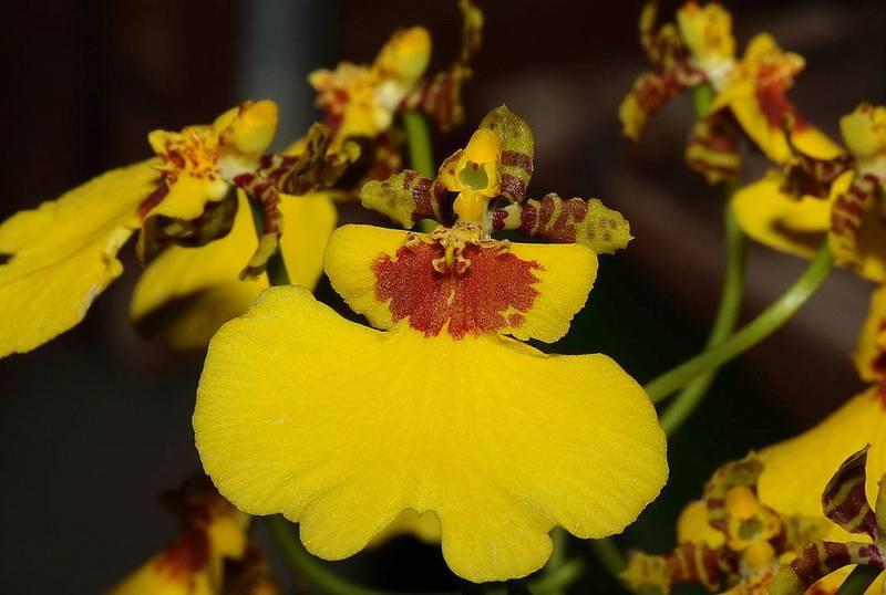 Какие комнатные растения имеют неповторимый аромат?
