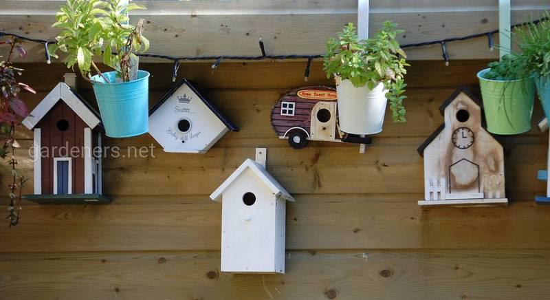 Заготовка семян для привлечения птиц весной