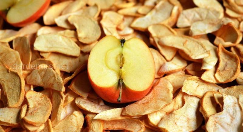 сушенные яблоки.jpg