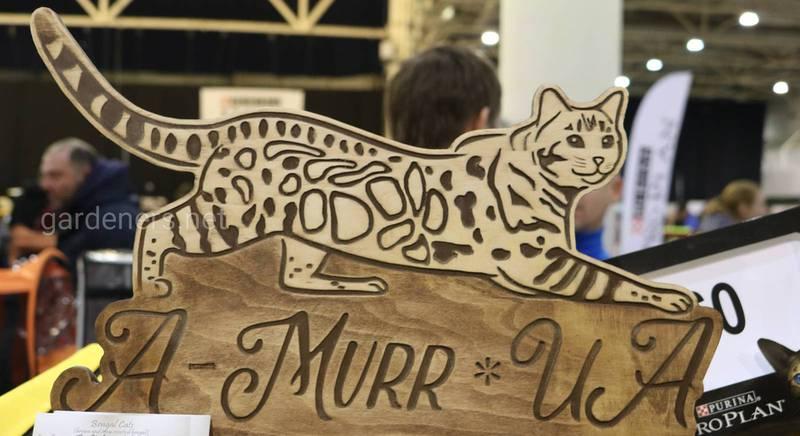 Питомник бенгальских кошек A-MurrUA.JPG