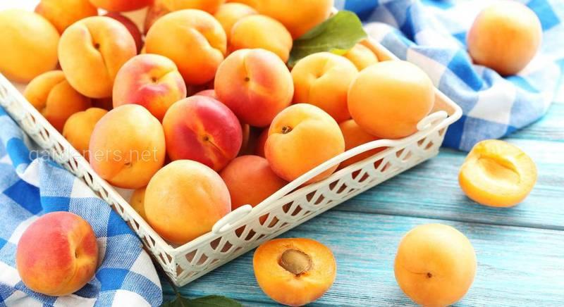 Користь абрикоса на організм людини!