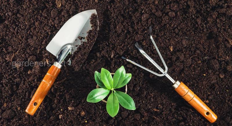 Обробка грунту перед висадкою розсади