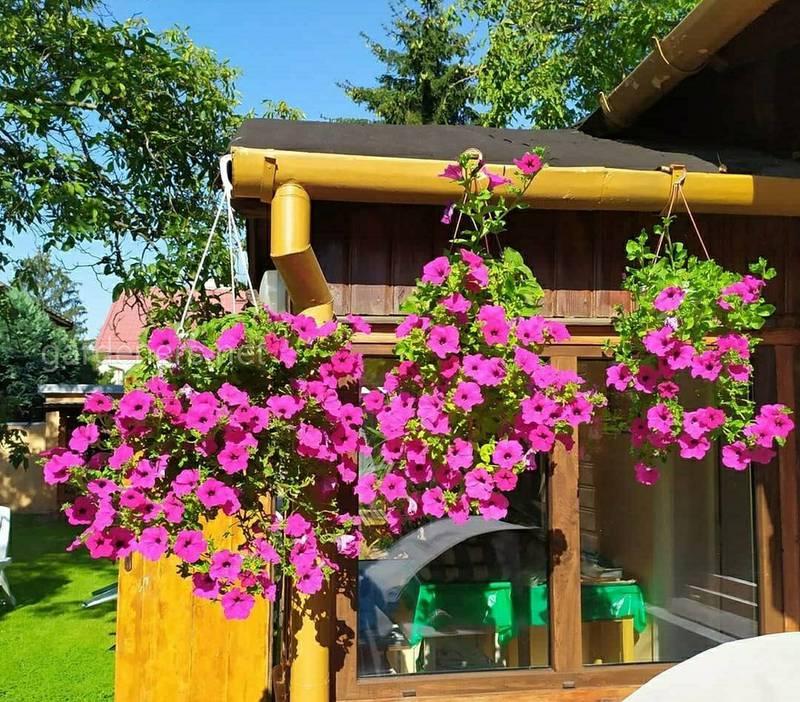 Как выбрать идеальные цветы для террасы или балкона?