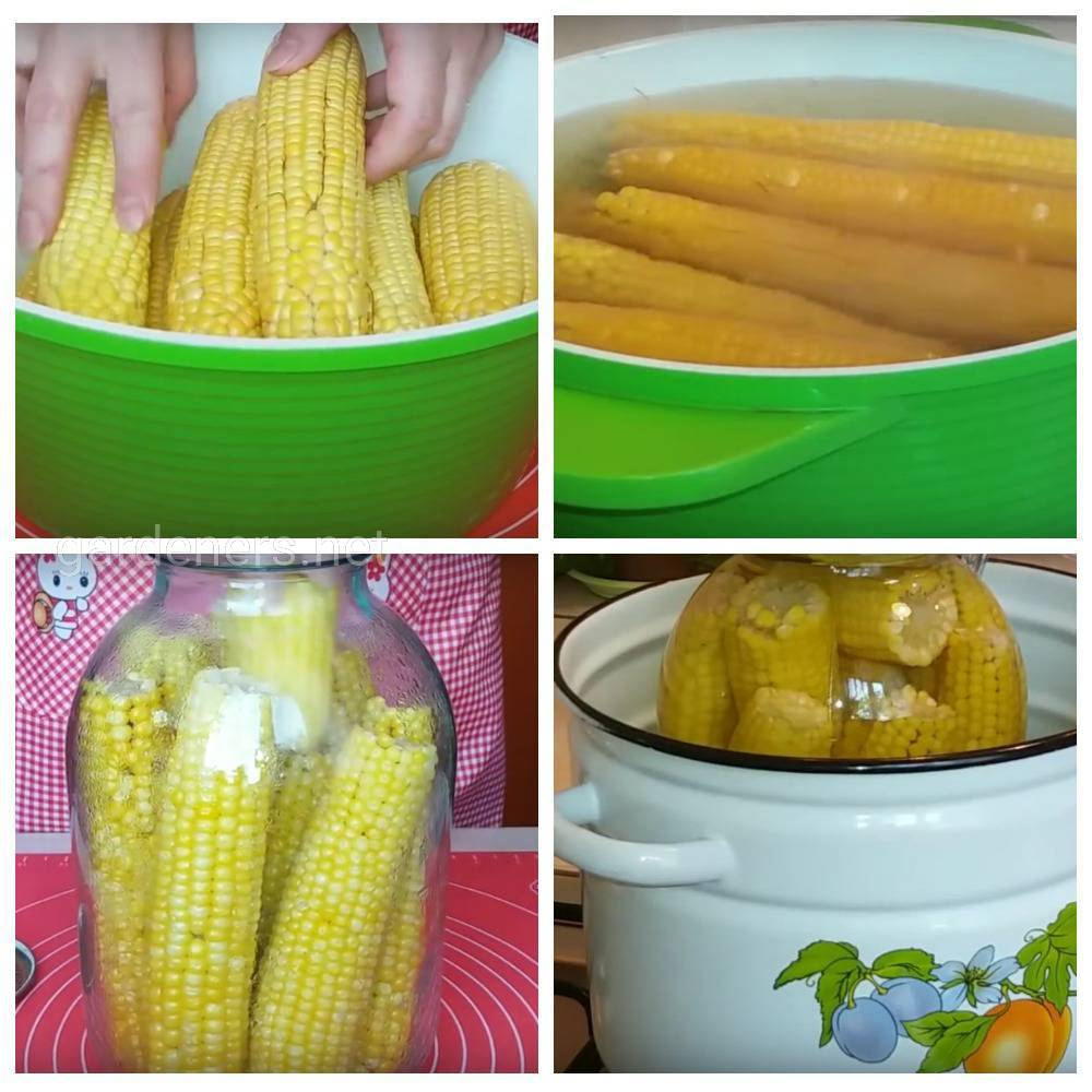 целых початков кукурузы в бутыле