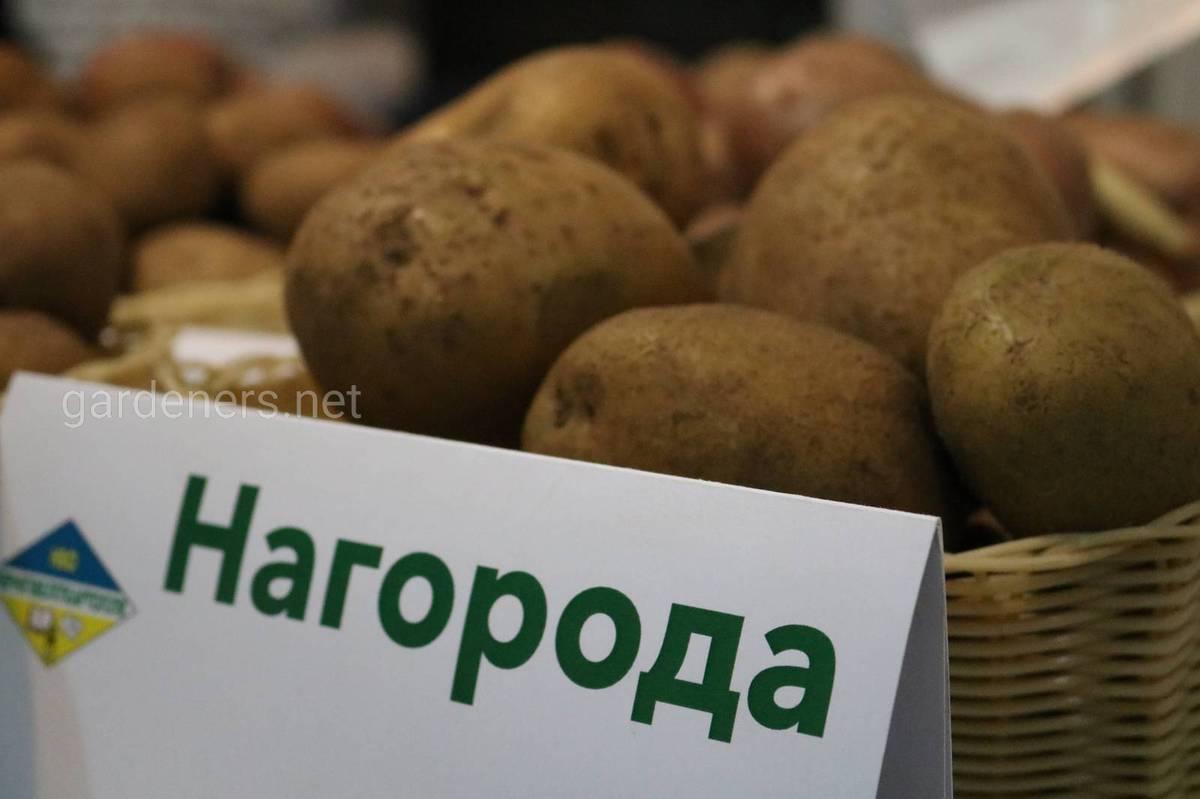 Нагорода сорт картоплі