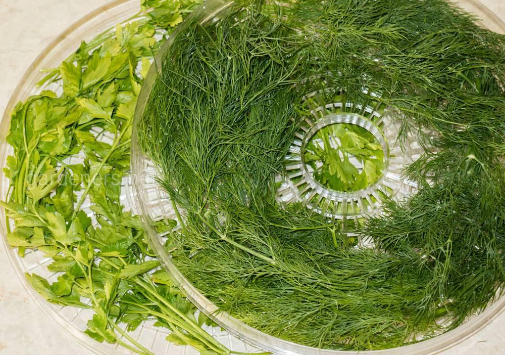 Сушка трав в дегидраторе