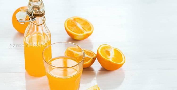 Лікер з апельсинів вдома