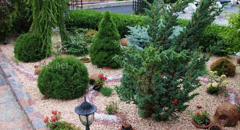 Як створити хвойну композицію в ландшафті саду