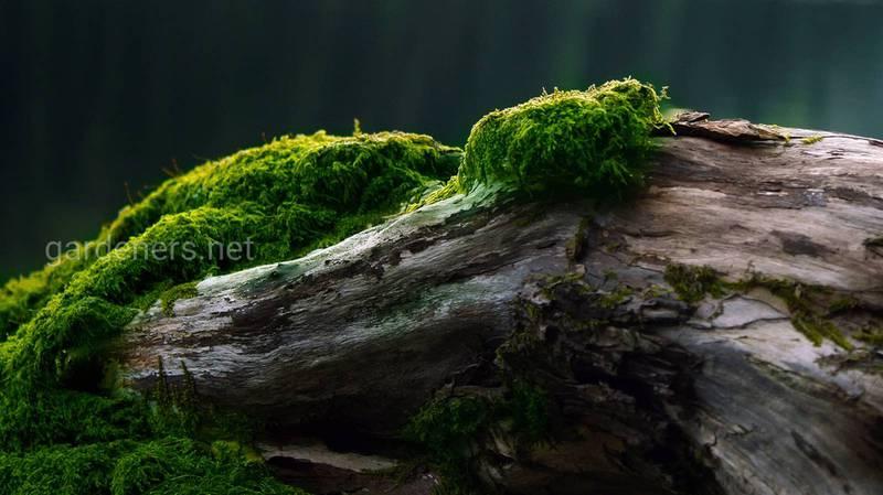 Топ-12 цікавих фактів про мох