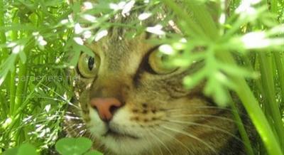 коты на грядках