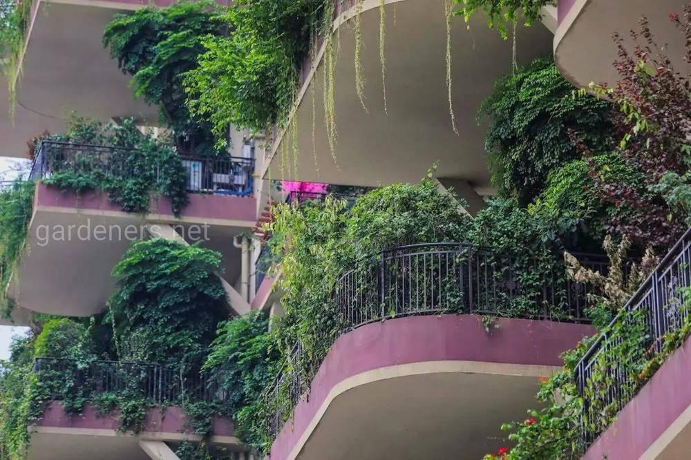 Китайський проект «Вертикальні ліси»