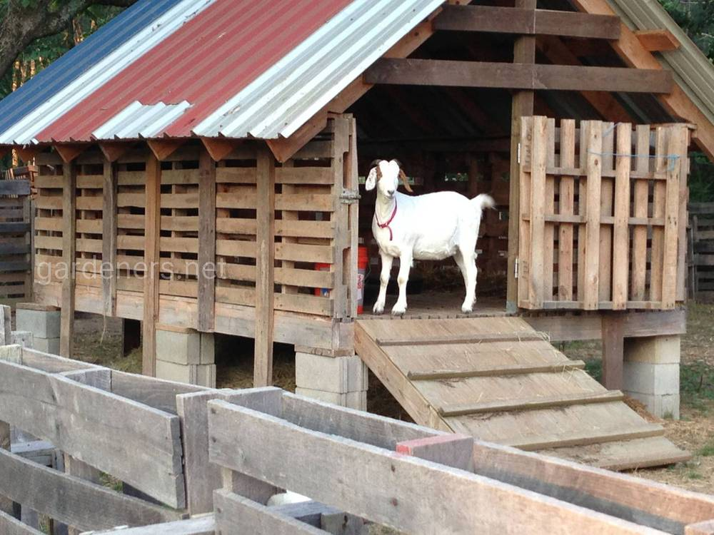Постройка сарая для коз