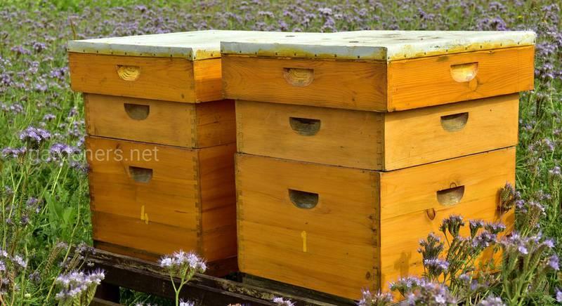 Для чего устанавливают гигиенические поилки и приманки для пчел? Как бороться с варроазом?