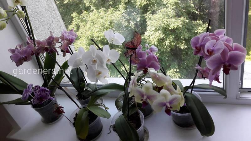 Как избавится от плесени в орхидеи: рекомендации, пошаговые действия